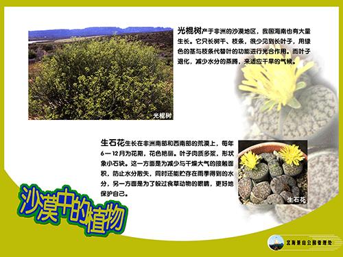 沙漠中的植物-2.png