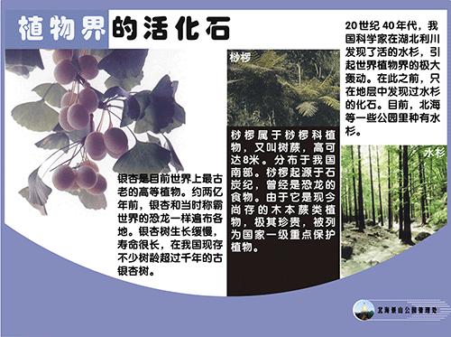 植物界的活化石.png