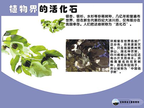 植物界的活化石-2.png